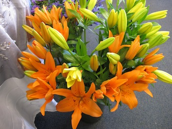 asiatic-lilies-cropped
