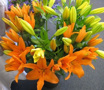 asiatic-lilies-orange