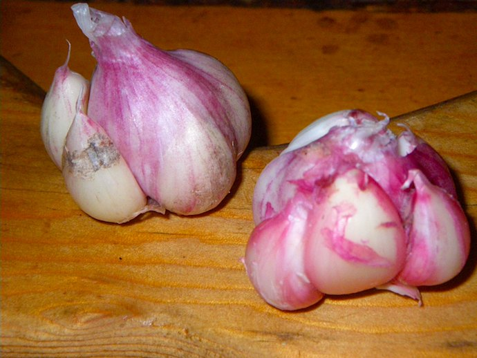 garlic-home-grown-recipe