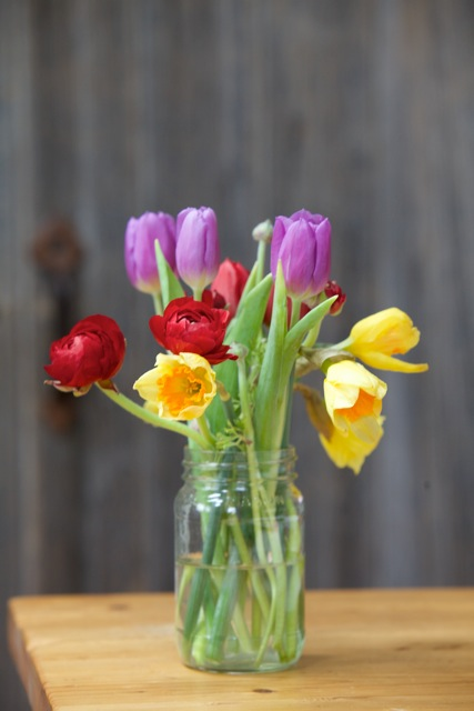 yellow-purple red tulips