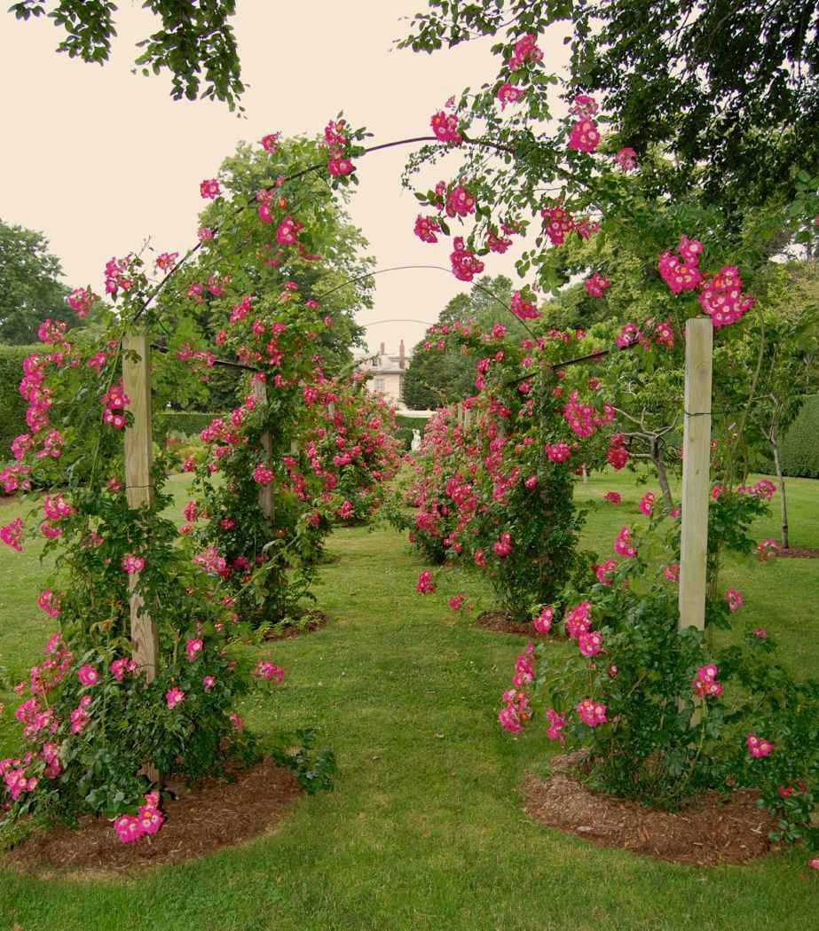 rose arbor garden-tour- newport-ri-doris-duke-rough-point