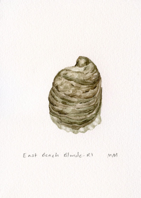 eastern oyster drawing - photo #11